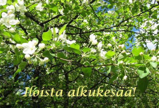 Hyvää kesän alkua